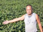 大豆 生産者コメント