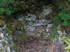 中山風穴地特殊植物群落