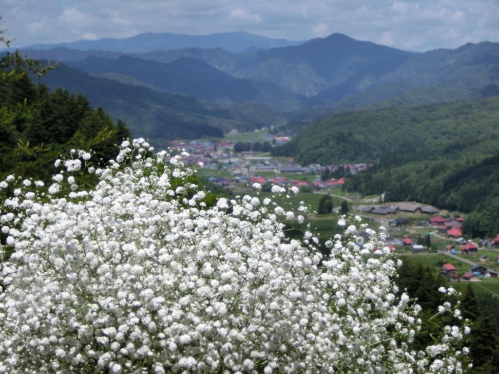 昭和の森より昭和村とかすみ草